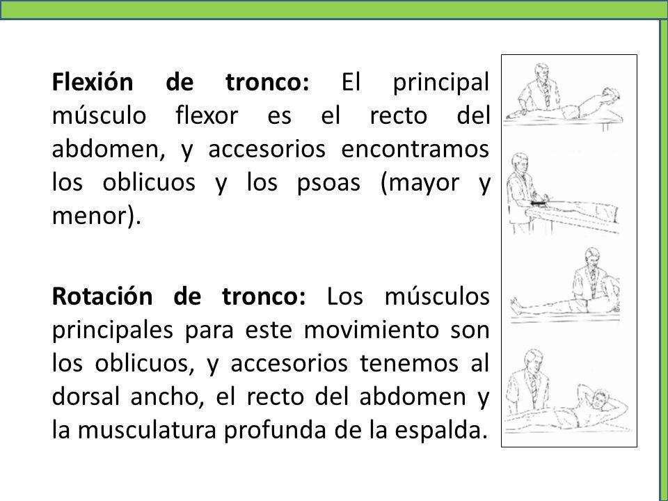 Flexión de tronco: El principal músculo flexor es el recto del abdomen, y accesorios encontramos los oblicuos y los psoas (mayor y menor).