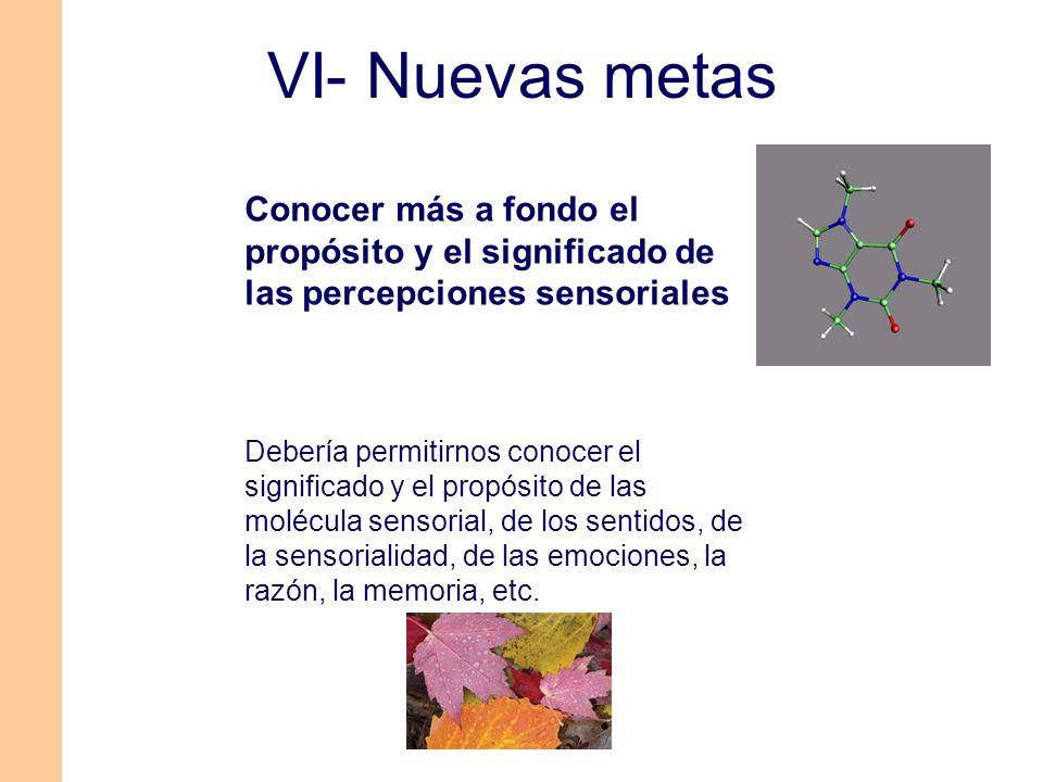 VI- Nuevas metas Conocer más a fondo el propósito y el significado de las percepciones sensoriales.