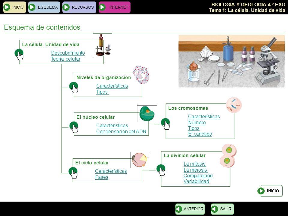 Esquema de contenidos La célula. Unidad de vida Descubrimiento