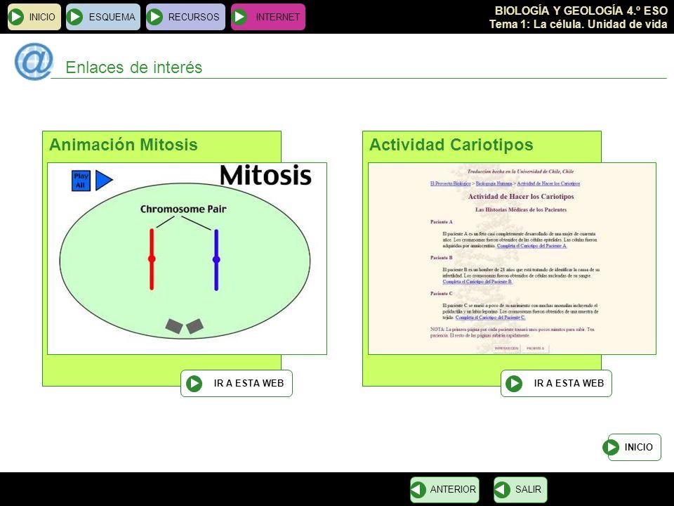Enlaces de interés Animación Mitosis Actividad Cariotipos INICIO