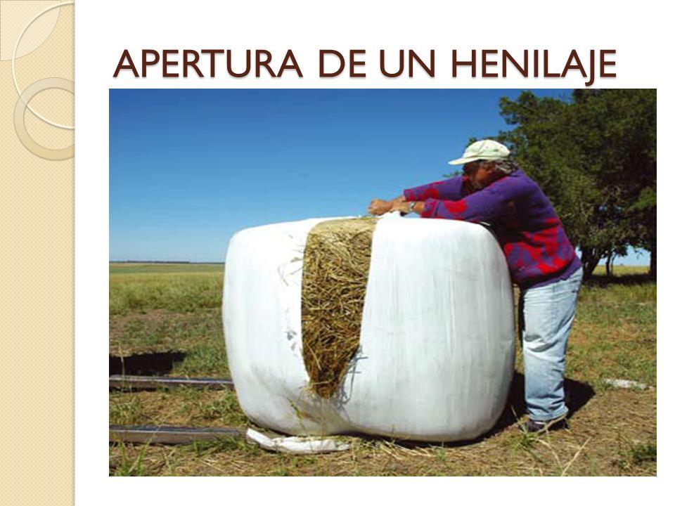 APERTURA DE UN HENILAJE
