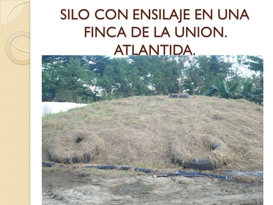 SILO CON ENSILAJE EN UNA FINCA DE LA UNION. ATLANTIDA.