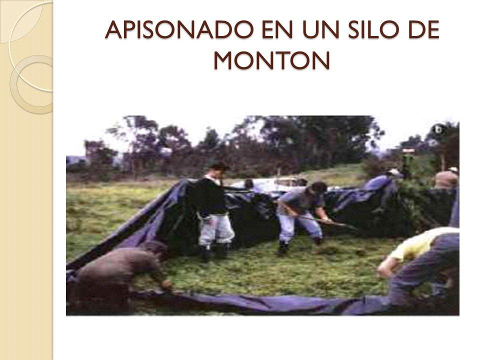 APISONADO EN UN SILO DE MONTON