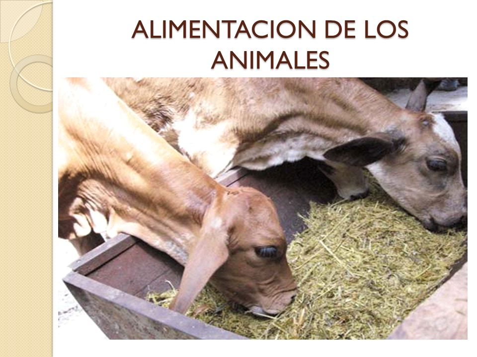 ALIMENTACION DE LOS ANIMALES