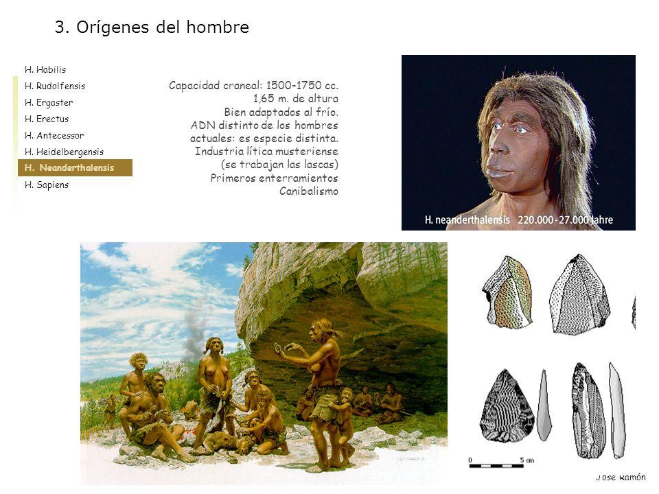 3. Orígenes del hombre Capacidad craneal: 1500-1750 cc.
