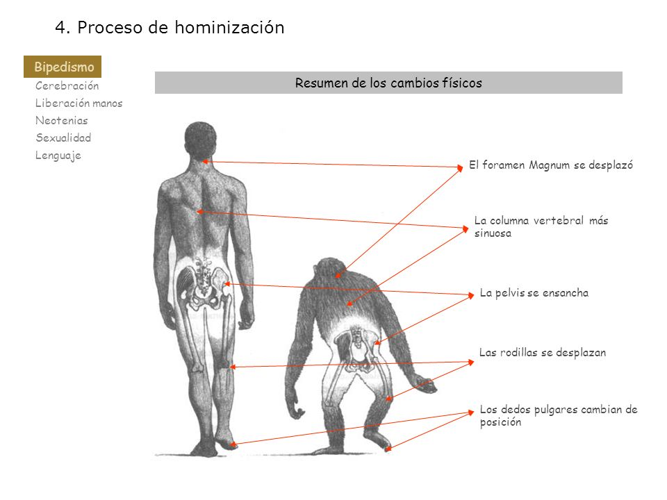 Resumen de los cambios físicos