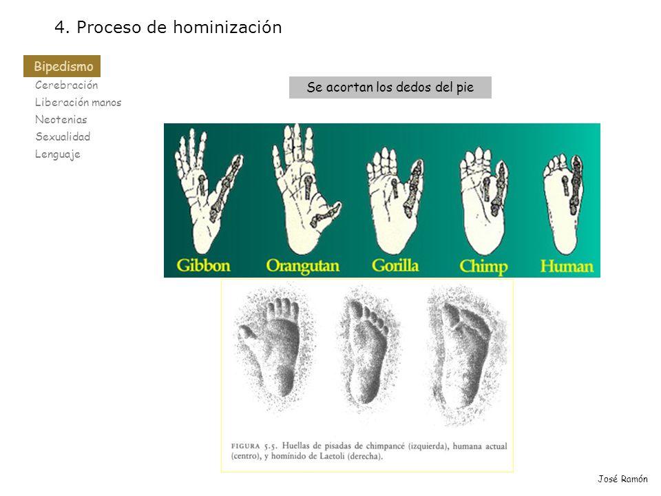 Se acortan los dedos del pie