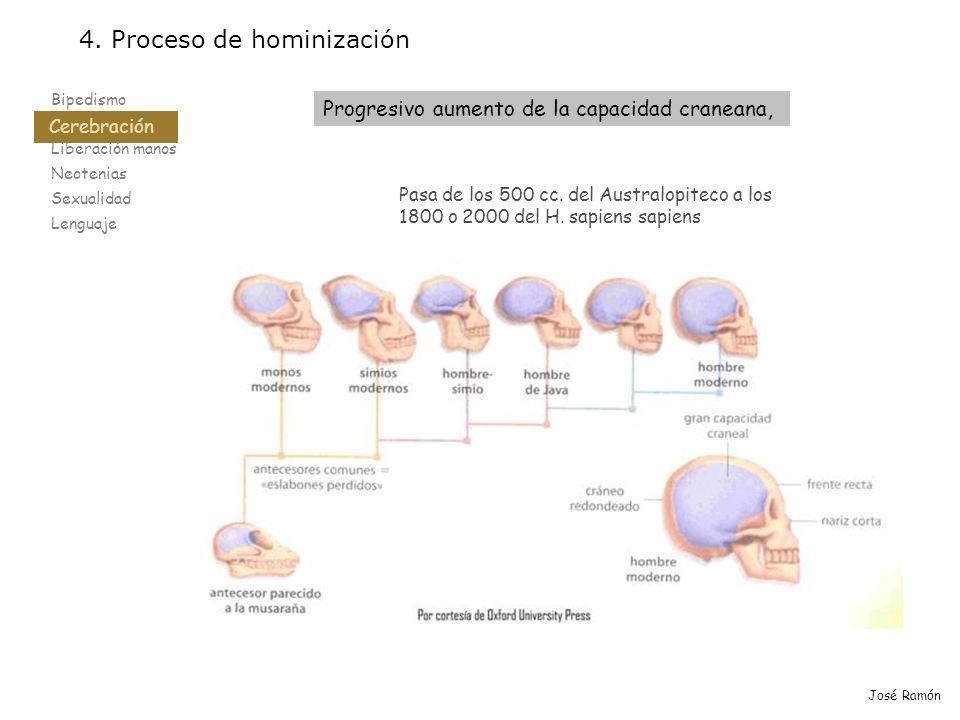 4. Proceso de hominización