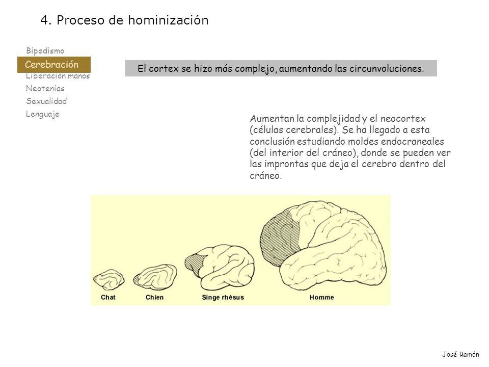 El cortex se hizo más complejo, aumentando las circunvoluciones.