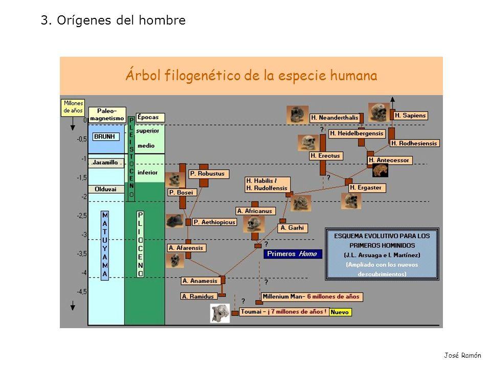 Árbol filogenético de la especie humana