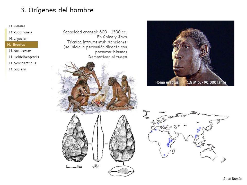 3. Orígenes del hombre Capacidad craneal: 800 - 1300 cc.