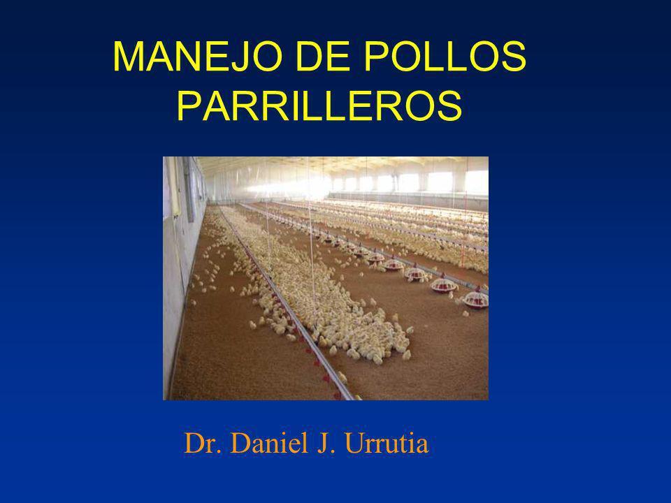 MANEJO DE POLLOS PARRILLEROS
