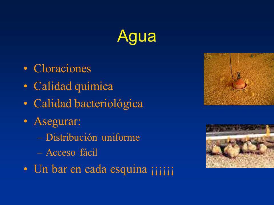 Agua Cloraciones Calidad química Calidad bacteriológica Asegurar:
