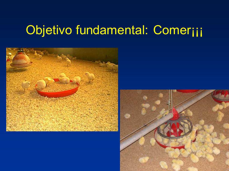 Objetivo fundamental: Comer¡¡¡