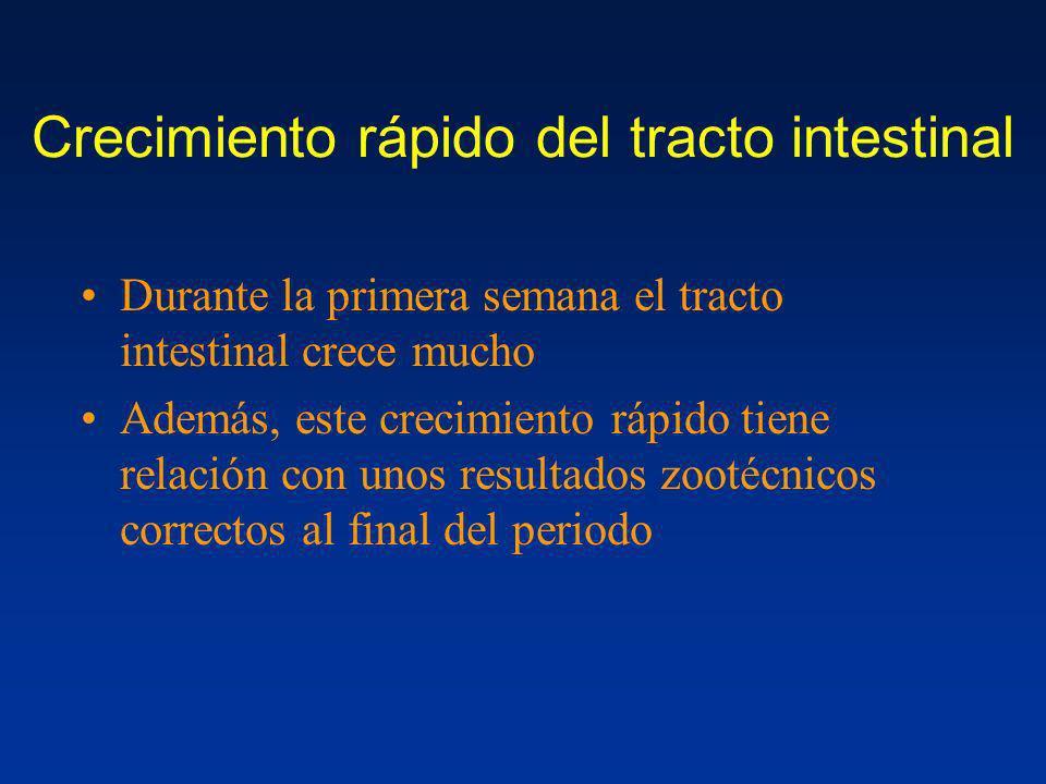 Crecimiento rápido del tracto intestinal