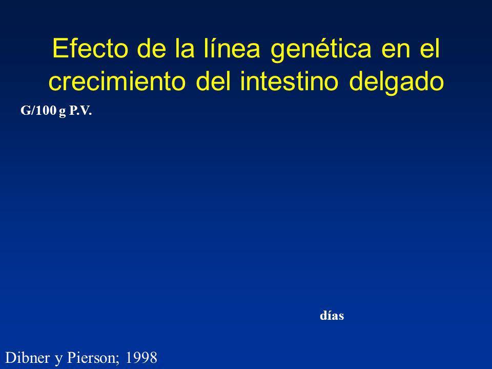 Efecto de la línea genética en el crecimiento del intestino delgado
