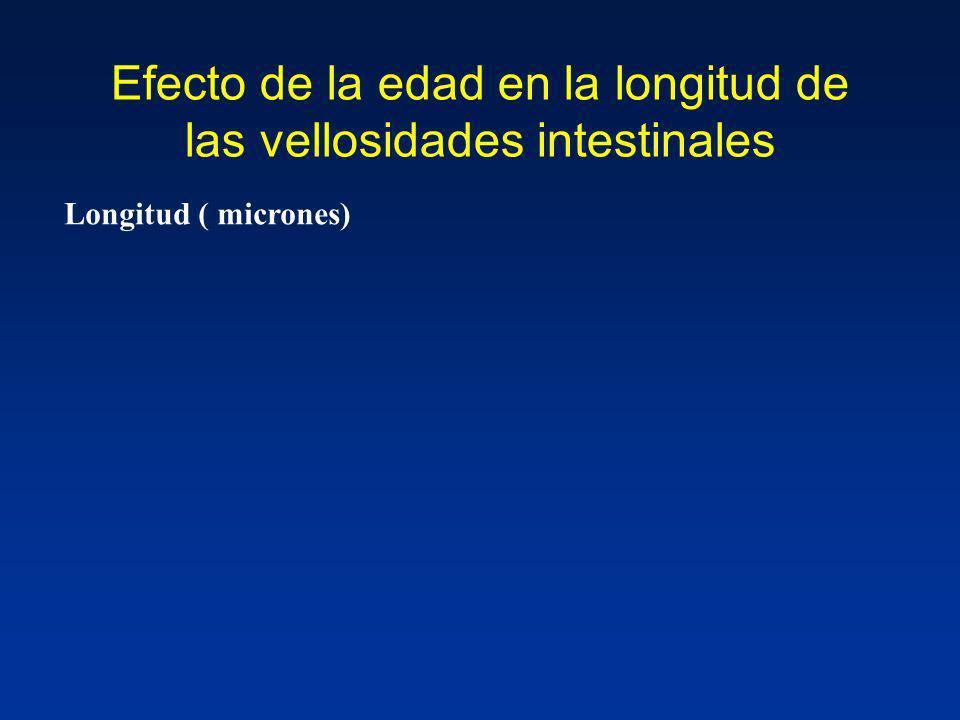 Efecto de la edad en la longitud de las vellosidades intestinales