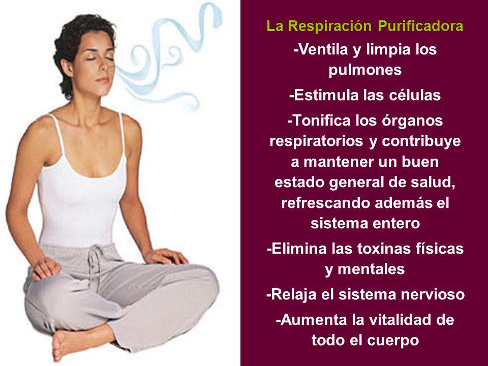 -Ventila y limpia los pulmones -Estimula las células