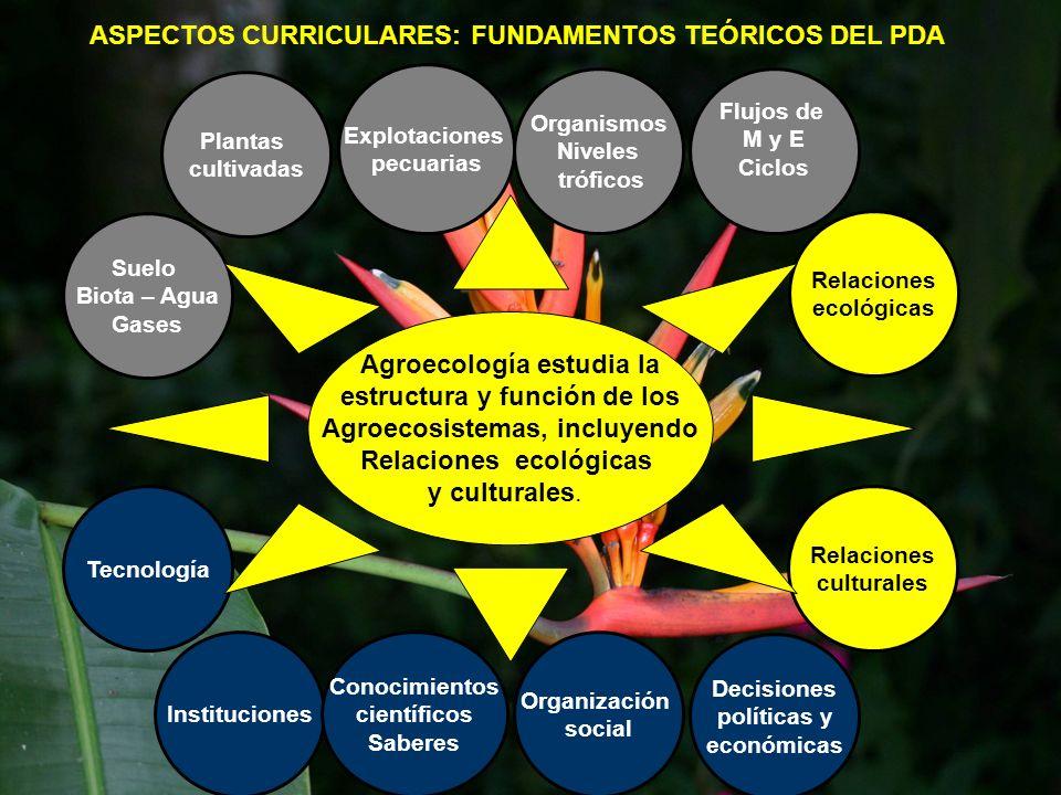 ASPECTOS CURRICULARES: FUNDAMENTOS TEÓRICOS DEL PDA