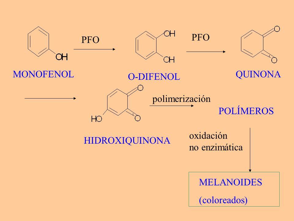 PFOPFO. MONOFENOL. QUINONA. O-DIFENOL. polimerización. POLÍMEROS. oxidación. no enzimática. HIDROXIQUINONA.