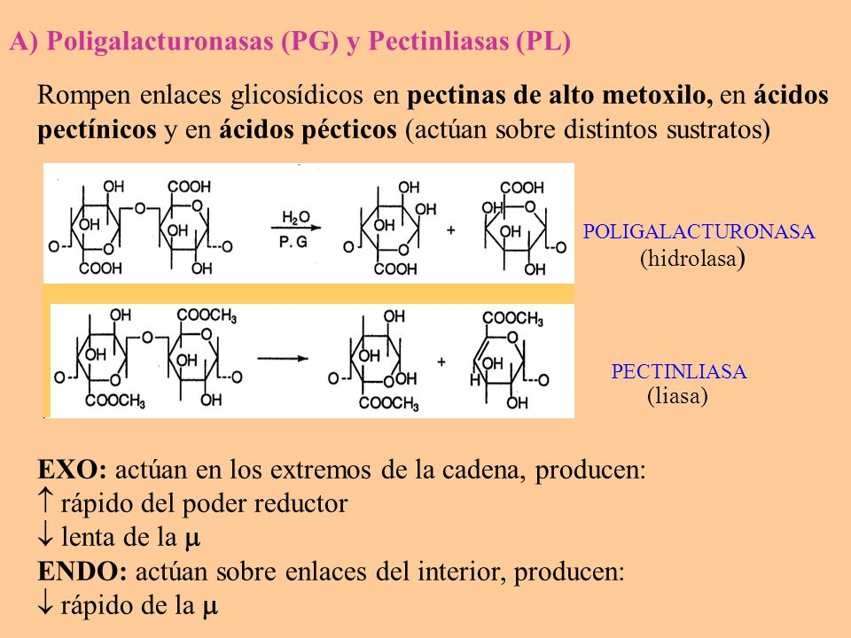 A) Poligalacturonasas (PG) y Pectinliasas (PL)