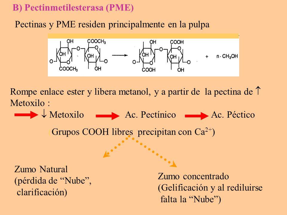 B) Pectinmetilesterasa (PME)