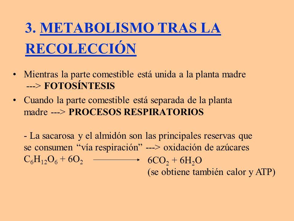 3. METABOLISMO TRAS LA RECOLECCIÓN