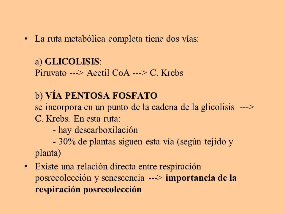 La ruta metabólica completa tiene dos vías: a) GLICOLISIS: Piruvato ---> Acetil CoA ---> C. Krebs b) VÍA PENTOSA FOSFATO se incorpora en un punto de la cadena de la glicolisis ---> C. Krebs. En esta ruta: - hay descarboxilación - 30% de plantas siguen esta vía (según tejido y planta)