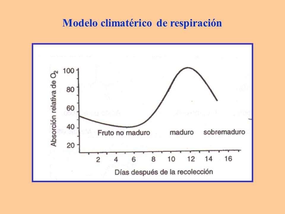 Modelo climatérico de respiración