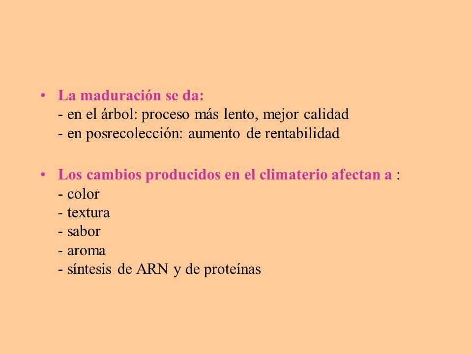 La maduración se da: - en el árbol: proceso más lento, mejor calidad - en posrecolección: aumento de rentabilidad
