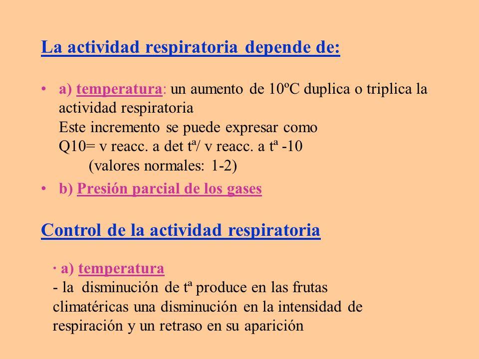 La actividad respiratoria depende de: