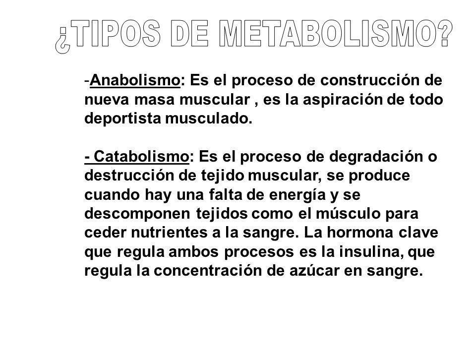 ¿TIPOS DE METABOLISMO Anabolismo: Es el proceso de construcción de nueva masa muscular , es la aspiración de todo deportista musculado.