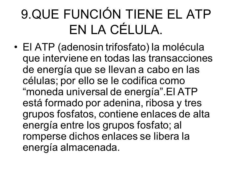 9.QUE FUNCIÓN TIENE EL ATP EN LA CÉLULA.