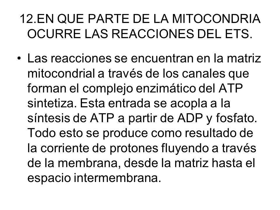 12.EN QUE PARTE DE LA MITOCONDRIA OCURRE LAS REACCIONES DEL ETS.