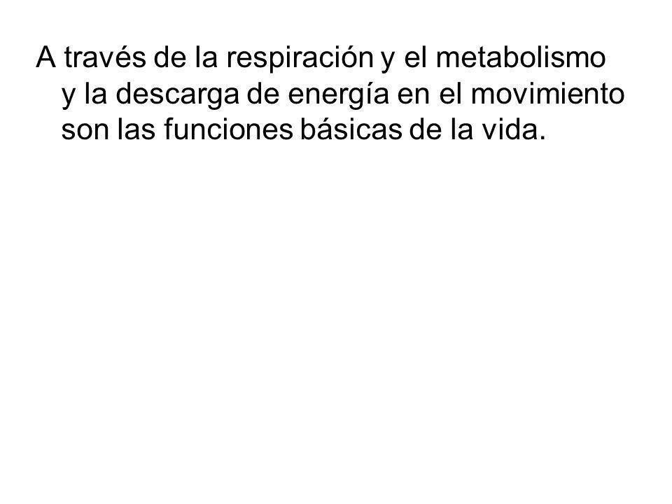 A través de la respiración y el metabolismo y la descarga de energía en el movimiento son las funciones básicas de la vida.