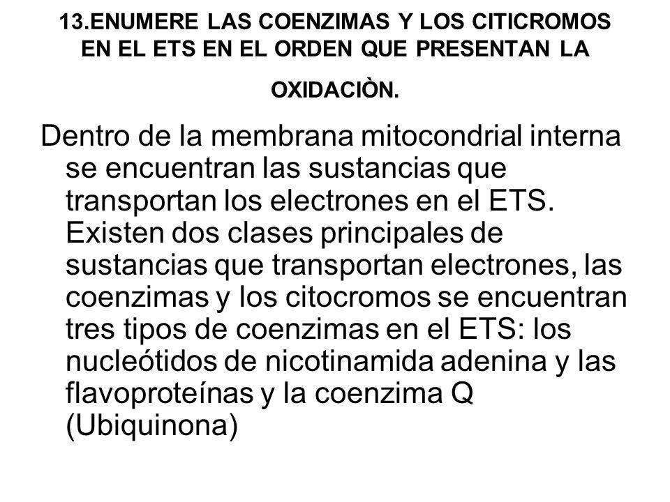 13.ENUMERE LAS COENZIMAS Y LOS CITICROMOS EN EL ETS EN EL ORDEN QUE PRESENTAN LA OXIDACIÒN.