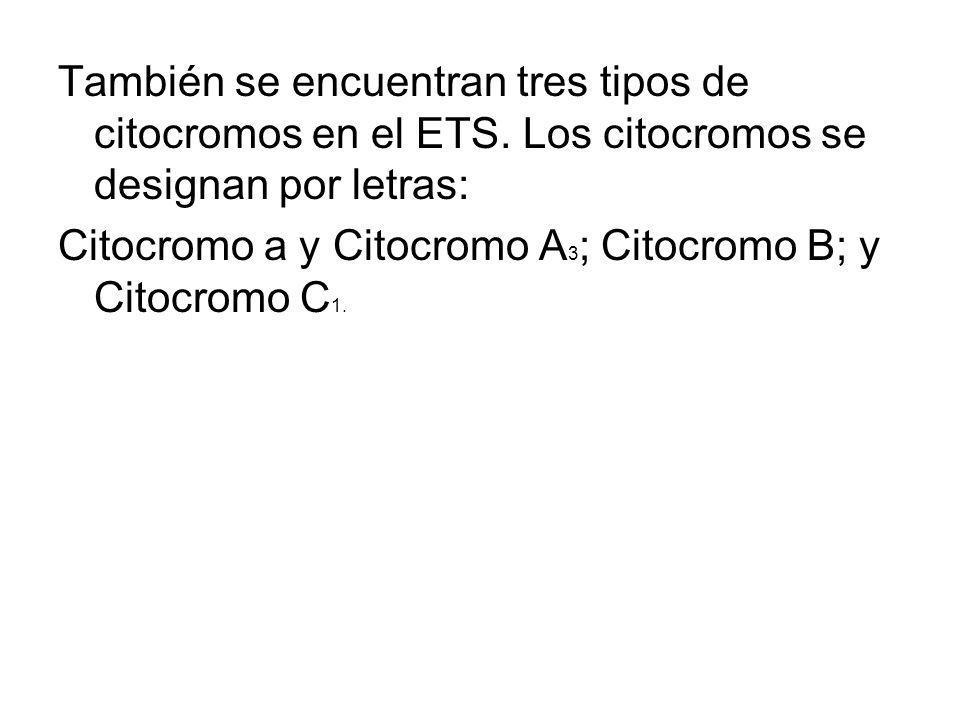 También se encuentran tres tipos de citocromos en el ETS