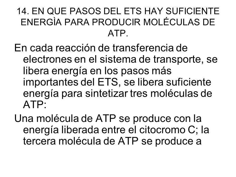 14. EN QUE PASOS DEL ETS HAY SUFICIENTE ENERGÌA PARA PRODUCIR MOLÉCULAS DE ATP.