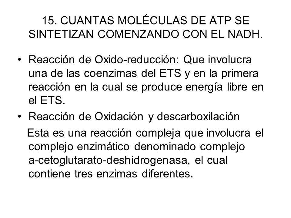 15. CUANTAS MOLÉCULAS DE ATP SE SINTETIZAN COMENZANDO CON EL NADH.