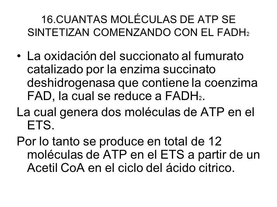 16.CUANTAS MOLÉCULAS DE ATP SE SINTETIZAN COMENZANDO CON EL FADH2