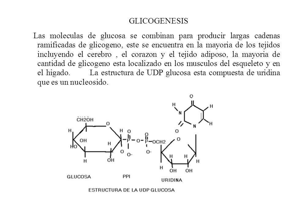 GLICOGENESIS