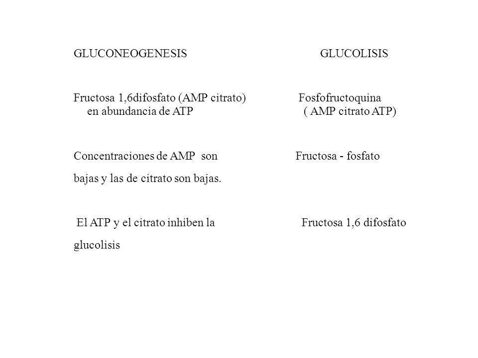 GLUCONEOGENESIS GLUCOLISIS