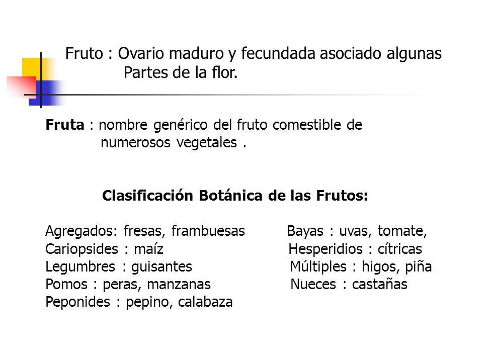 Fruto : Ovario maduro y fecundada asociado algunas Partes de la flor.