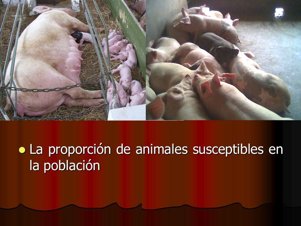 La proporción de animales susceptibles en la población