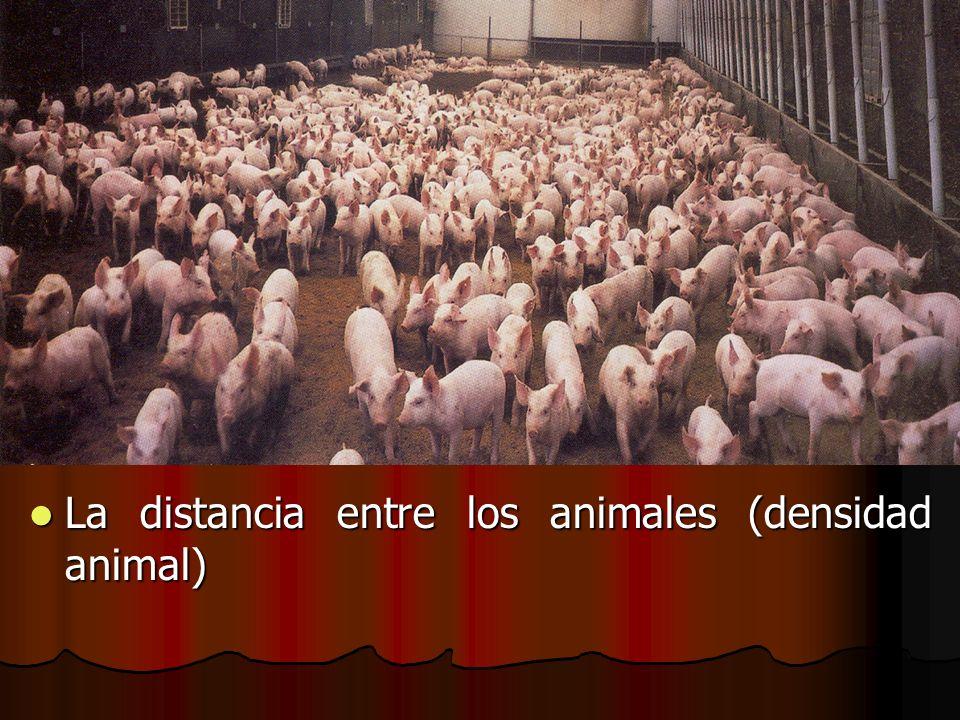 La distancia entre los animales (densidad animal)