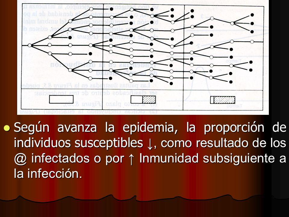 Según avanza la epidemia, la proporción de individuos susceptibles ↓, como resultado de los @ infectados o por ↑ Inmunidad subsiguiente a la infección.