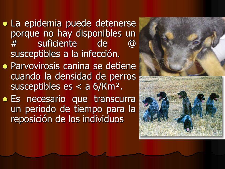 La epidemia puede detenerse porque no hay disponibles un # suficiente de @ susceptibles a la infección.