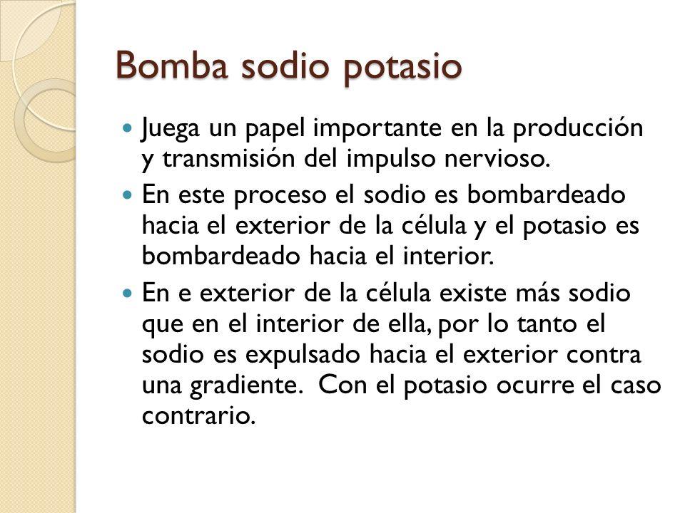 Bomba sodio potasioJuega un papel importante en la producción y transmisión del impulso nervioso.
