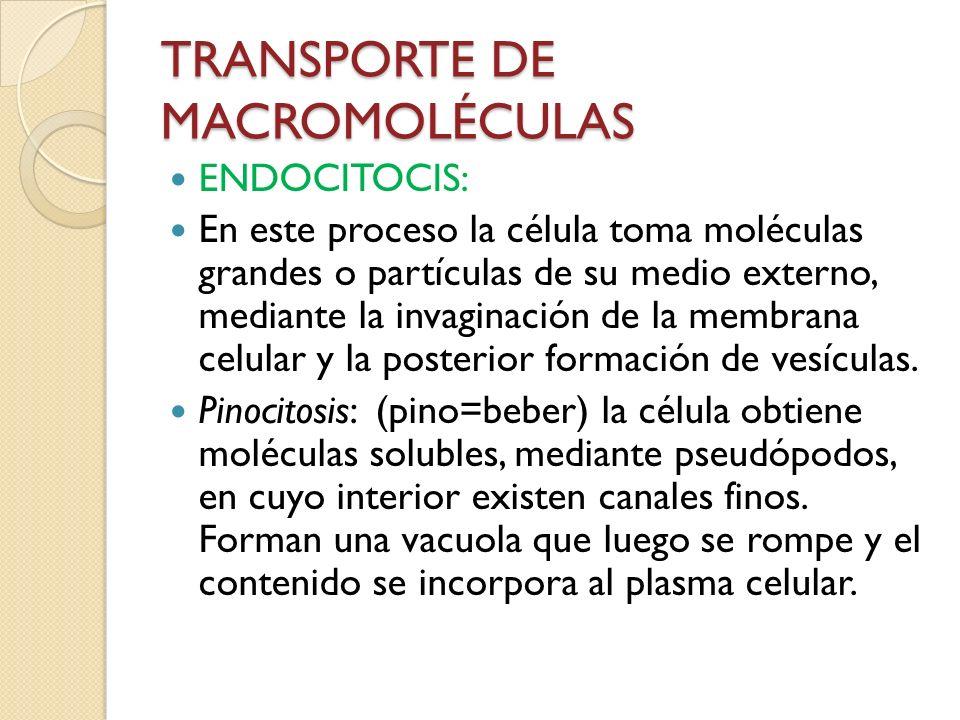 TRANSPORTE DE MACROMOLÉCULAS