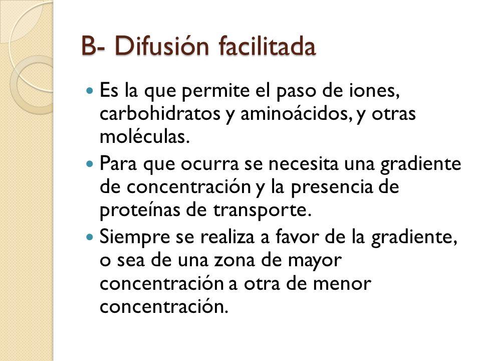 B- Difusión facilitada